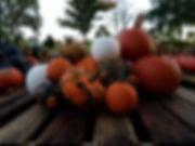 decorative white warty pumpkin driftless