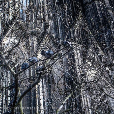 Blue Birds  Cologne 2016