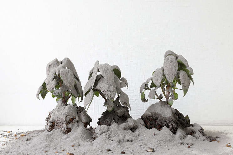 灰の風景.jpg