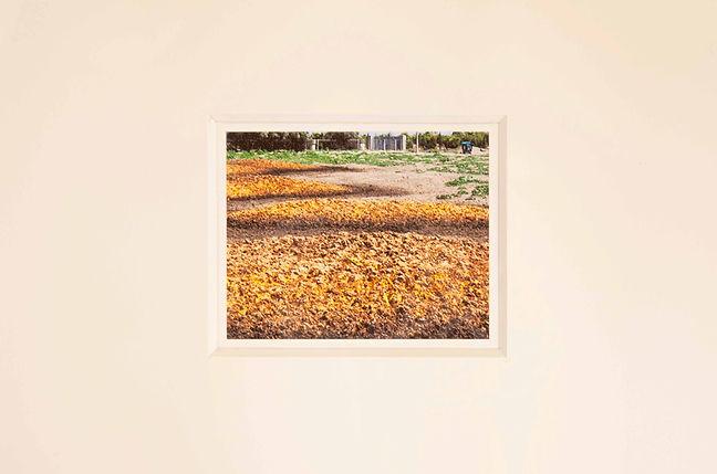 g.-olmo-stuppia,-Paesaggi-(Sigonella),-2