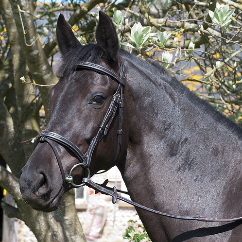 Elegance German Leather Bridle With Flash Noseband