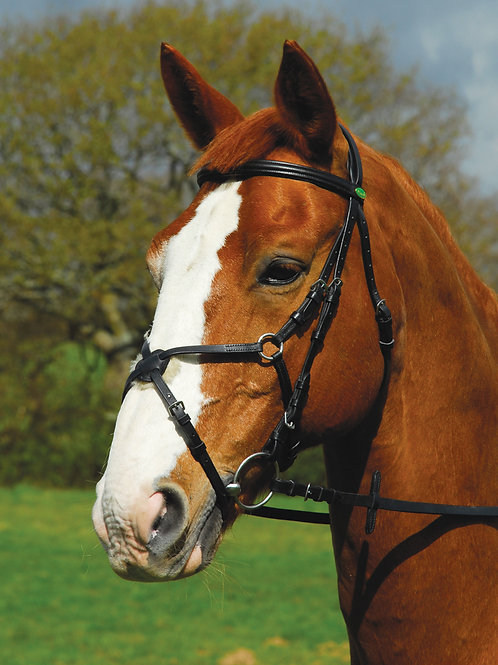 German Leather 'Comfort' Bridle With Mexican Noseband