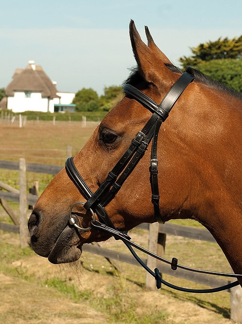 English Leather Bridle With Raised Cavesson Noseband