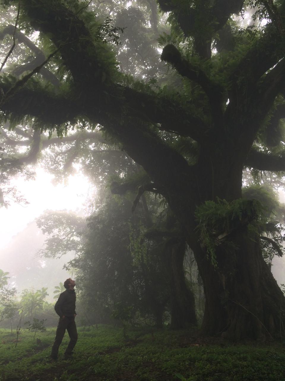 Pim in the Harenna Forest, Ethiopia