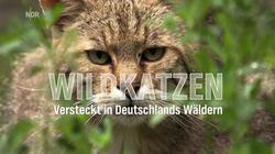 WILDKATZEN - WILDCATS