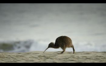 Oeps, we did it again: more awards for 'New Zealand' & 'Megeti' @ Darßer Naturfi