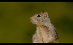 GOING NUTS, the squirrel world