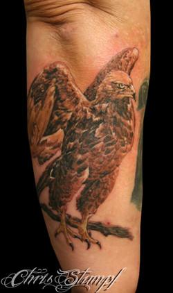 vera_eagle