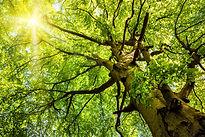 cime-arbre.jpg