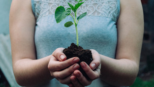 Insights into Creating a 'Sustainable Living Brand'