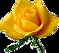 SeekPng.com_florais-png_926163.png