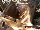Hurrican Otto was detrimental to many older rainforest giants on our property. Some of the wood has come to good use - like a handmade sink!