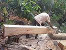 reutilizing fallen timber after hurrican OTTO