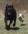 Dog_size_variation.png