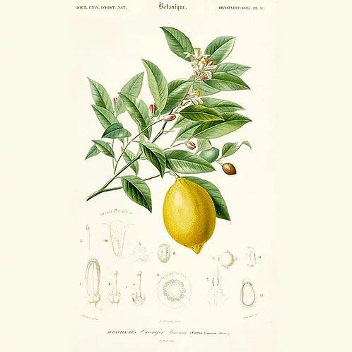 Huile essentielle de citron - 10ml
