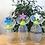Thumbnail: Haakaa - Bouchon Recueil-Lait Petite Fleur Silicone - Bleue