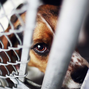 Laws Related to Cruelty Towards Animals
