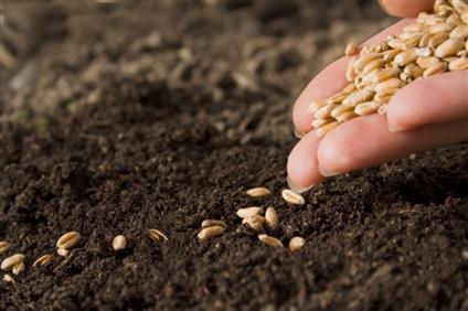 Sowing_Wheat_New.jpg