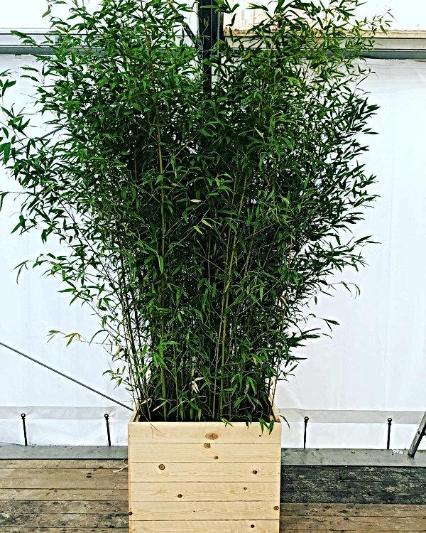 location plante Paris France