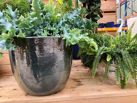 vente de plante tropicales