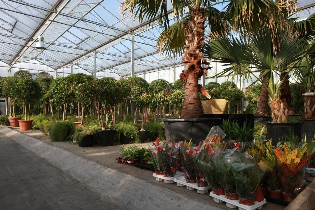 location plante