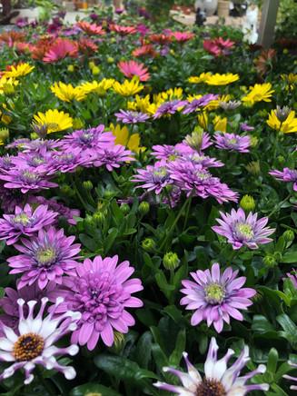 plante jardin