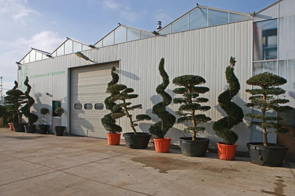 location plante verte