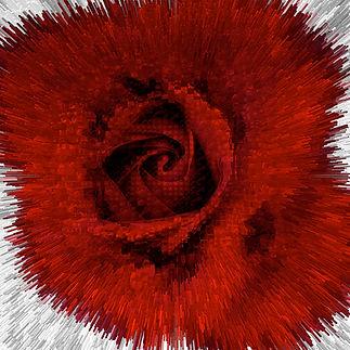 Rosa Gestante .jpg