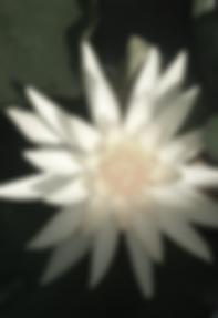 Screen Shot 2019-01-19 at 12.10.43 am.pn