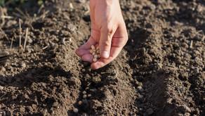 Conheça as principais linhas de crédito para pequenos agricultores