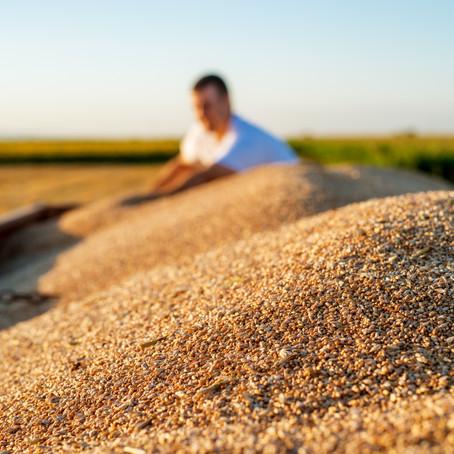 4 dicas para produtores rurais ter sucesso na produção