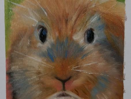 Bunny Rabbit?