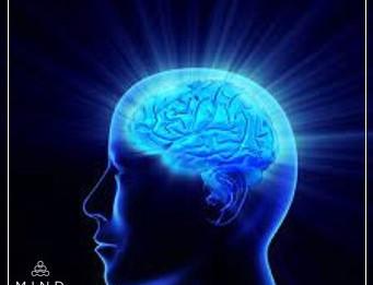 A meditação e o seu cérebro