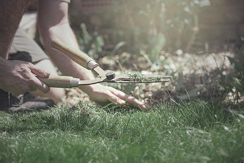 grass-trimming-e-d-landscaping-maintenance-service-image