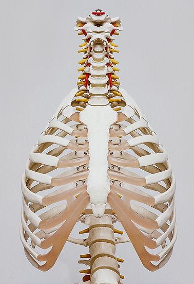 Ostéopathe Cagnes-sur-Mer Huellic