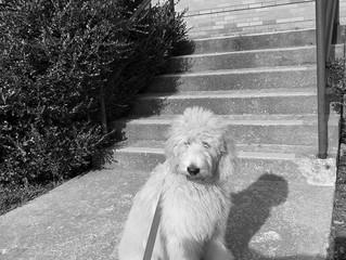 Meet Ripley!