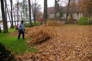 Why removing leaves from your lawn is important?