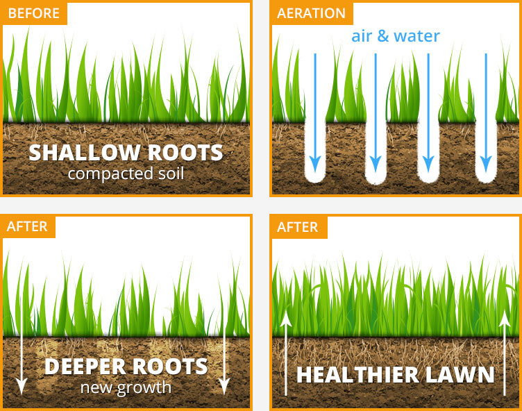 Aeration and Overseeding in Bel Air area