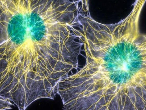 Could Our Consciousness be Directly Linked to Light?