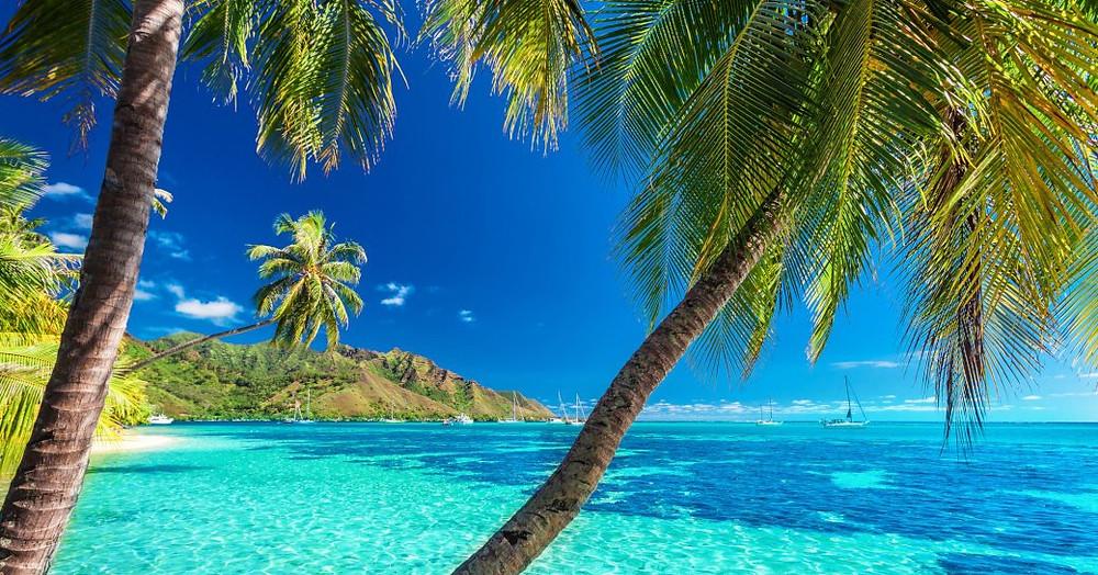 Tahiti, Fransız Polinezyası beyaz kumlu bir plaj üzerinde mavi sular üzerinde palmiye ağaçları asmak