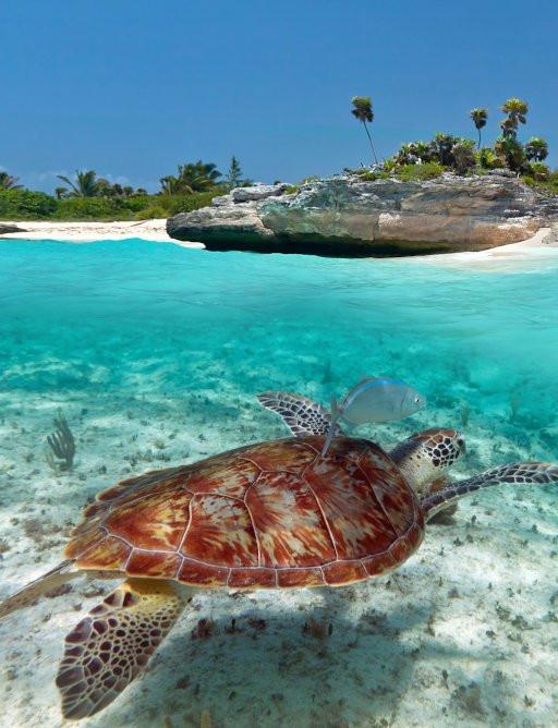 Meksika'da deniz yüzeyinin altında kaplumbağa, yukarıda görülen ada