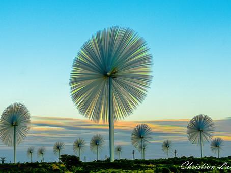 zolacphoto a le vent en poupe !
