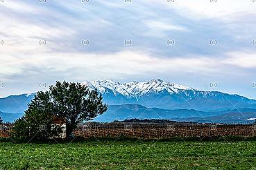 Le Canigó vue depuis la plaine du roussillon 66000 Pyrénées Orientales