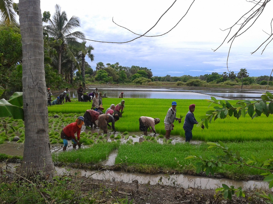 Community Energy Cooperatives in Indonesia
