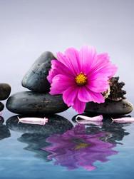 Health, Wellness & Spiritual