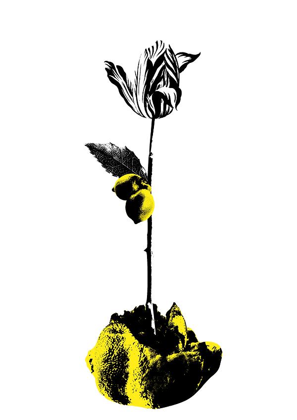 lemon plant2layers.png