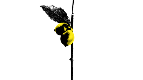 LEMON PLANT (PLANT 28) - 2020