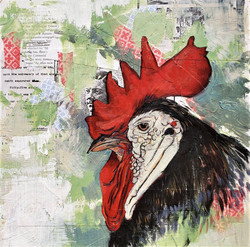 Rooster, 2015