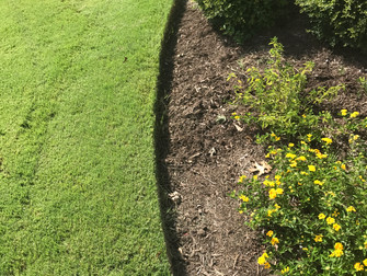 Summer Lawn Care in North Texas