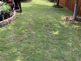 Custom Solutions for Shady Lawn Areas